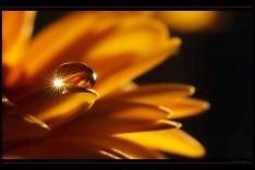 Flor y gota